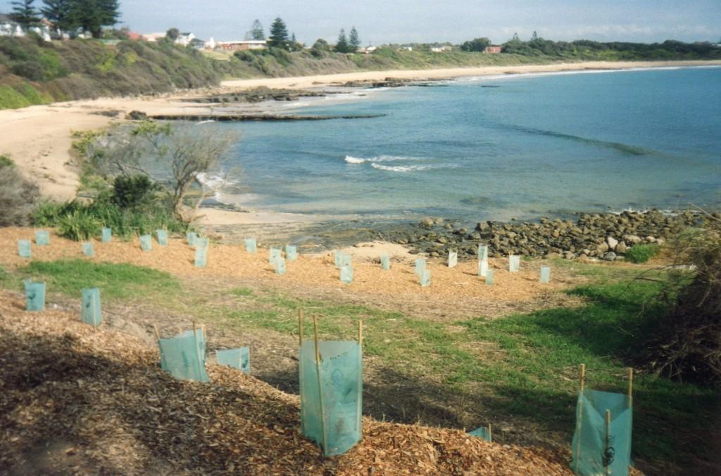 Community efforts revegetate beaches