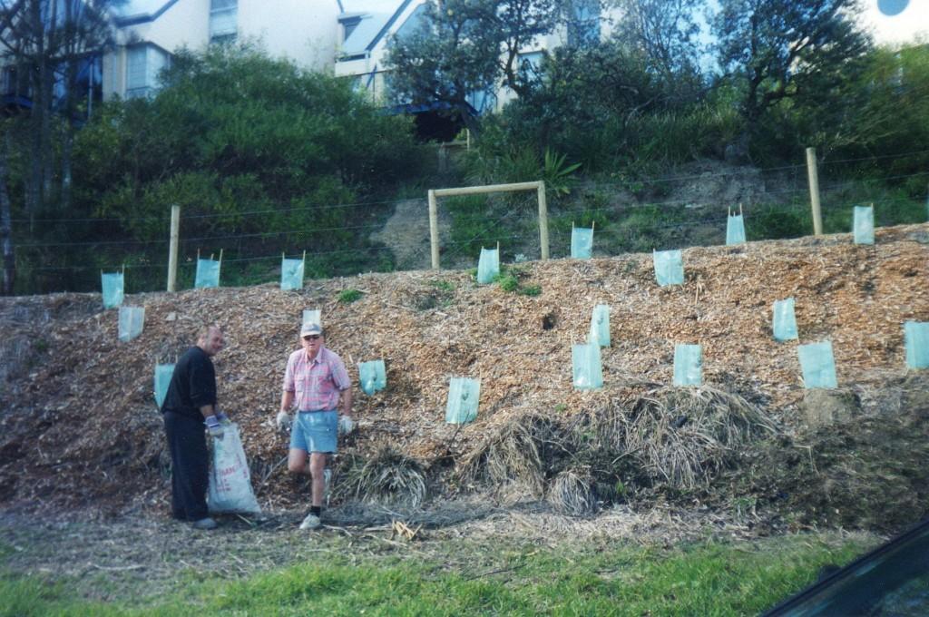 Community plants saplings